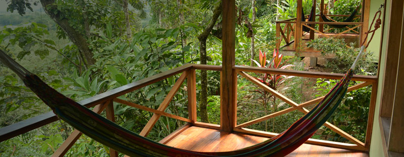 Budget Rainforest Lodges